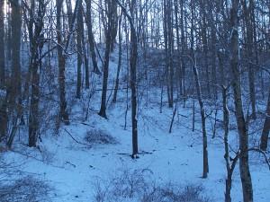 woods in snow